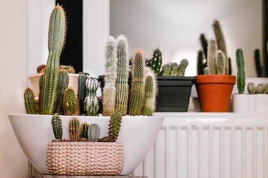 Βιοφιλικός σχεδιασμός: Γιατί χρειαζόμαστε τα φυτά στη ζωή μας